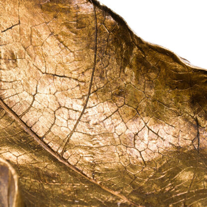 Large Gold Curled Leaf Sculpture